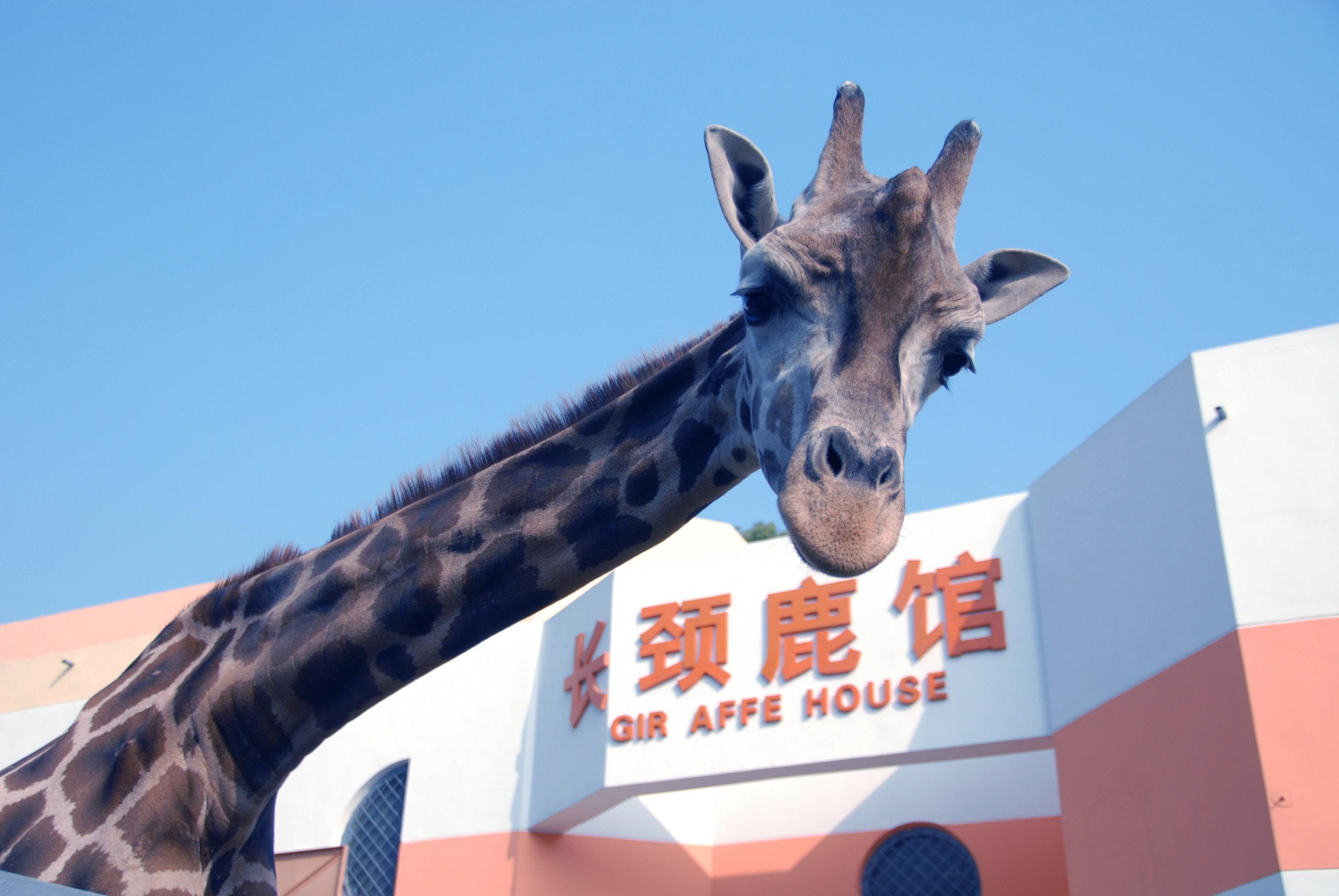 长颈鹿-武汉ag游戏直营网 平台园官网