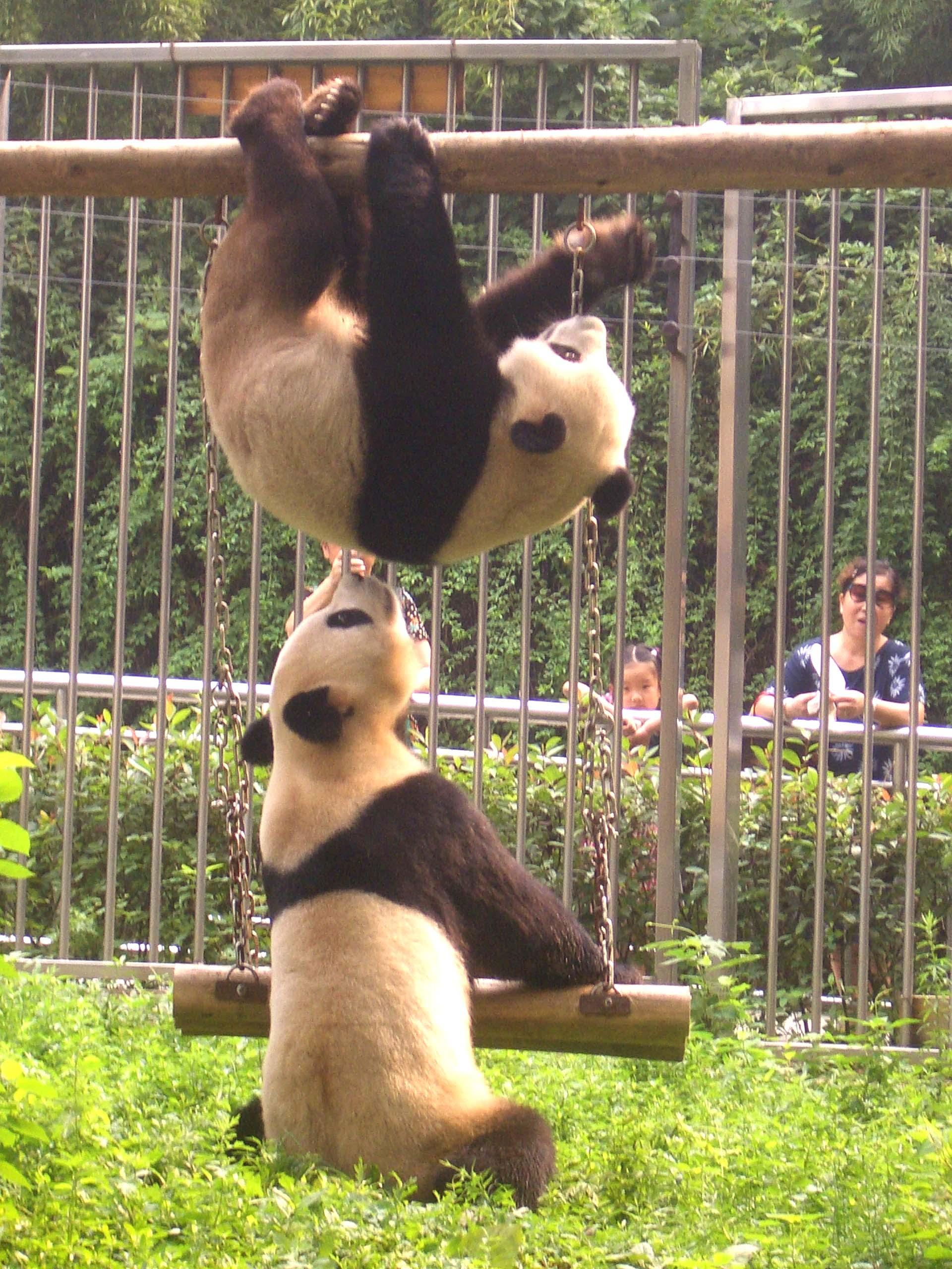 中国野生动物保护教育